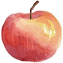 SCD_AppleofmyEye_apple2