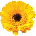 cwJOY_IntheGarden_flower2