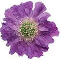 JAM-WeddingBliss-flower2