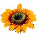 JAM-FallFestival-sunflower1