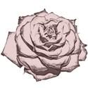 rose_cutout2