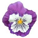 jThompson_laceydays_flower1